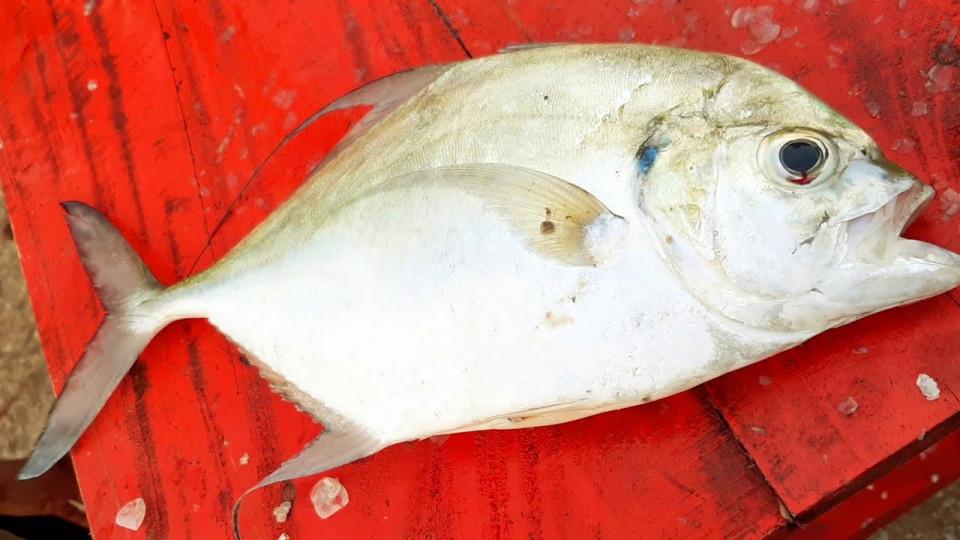 Jenis Ikan Bakar